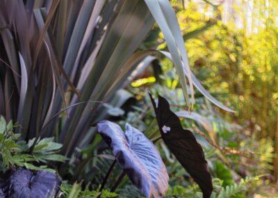 Tropical Style Rock Garden